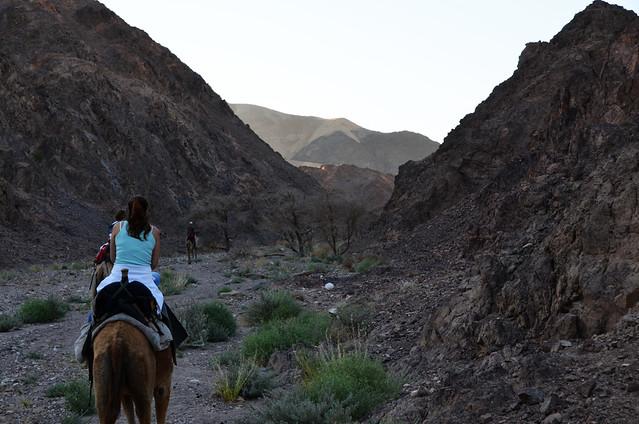 Paseando por el desierto Israael