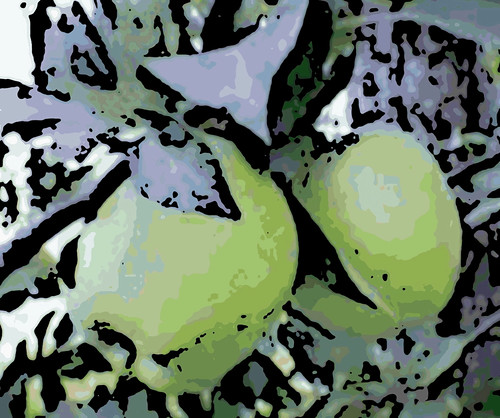 Two Apples at Nashoba Orchard (Digital Woodcut) by randubnick