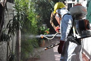 KLa fumigación es una de las estrategias contra estas enfermedades