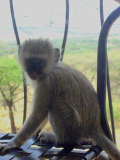 Affenbesuch auf meinem Balkon