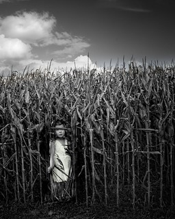 Shy in the Corn