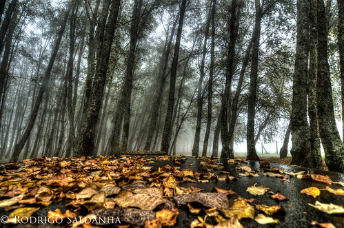 Outono by Rodrigo Saldanha de Almeida