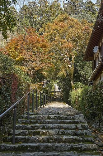 【写真】紅葉 : 建礼門院陵