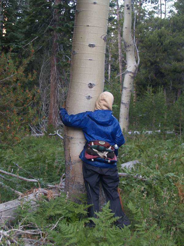 Vicki tree-hugging a huge aspen in Glen Aulin