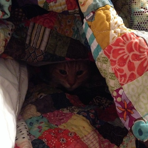 328:365 Kitty quilt fort