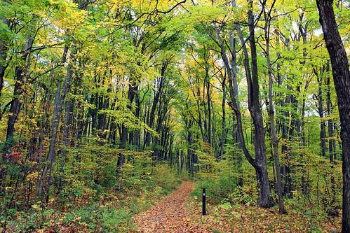 automne québec parcnationaldoka sentiercalvaire