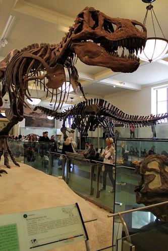 Museu de História Natural New York