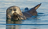 Sea_otter_3 by DawnWilsonPhotography