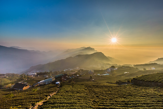 Sunset at Tea Farm, Alishan, Taiwan