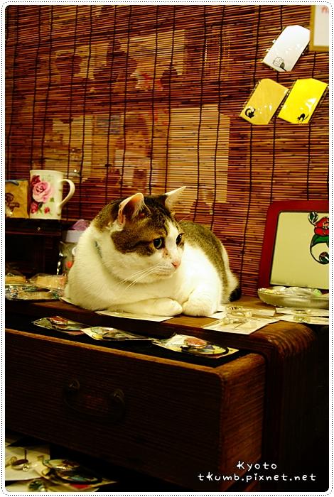 胖貓咖啡 (5).jpg