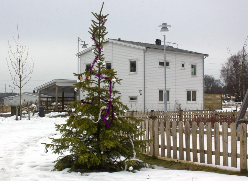 A February Christmas Tree