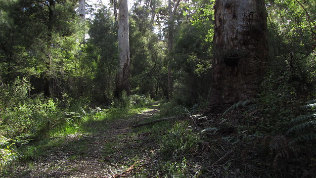 Day 31: Leaving Beedelup National Park
