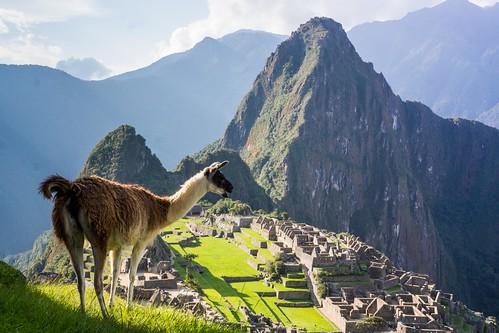 peru animal machupicchu ancient ruins inca mountain herowinner gamesweepwinner wild 15challengeswinner instagram