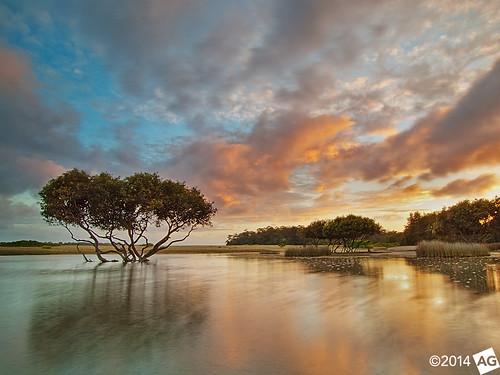sunrise reflections mangrove lonetree bonnievale theshire rnp theroyalnationalpark