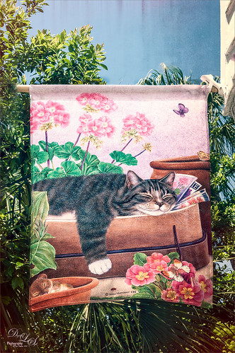 Image of a cat banner at the City Cat Country Cat store in St. Augustine