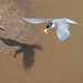 River tern Fishing 3