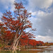 Fall on the Frio River by J Centavo