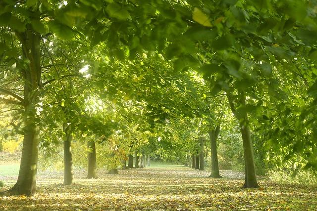 Leaf Path