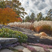 Autumn at CMB Gardens by just joani