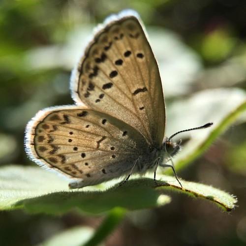 蝶 #butterfly # #7x #macro #olloclip @ @tomo_konchan's 実家