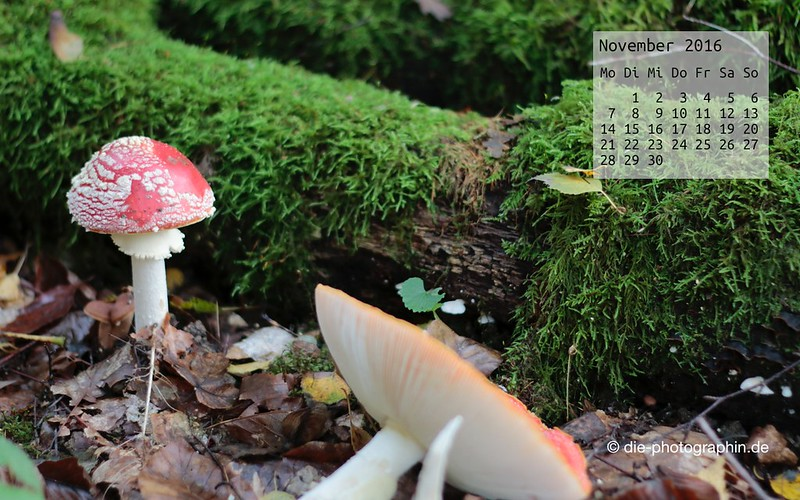 fliegenpilz_november_kalender_die-photographin