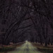 Tree Lined Road by Jonathan Tasler