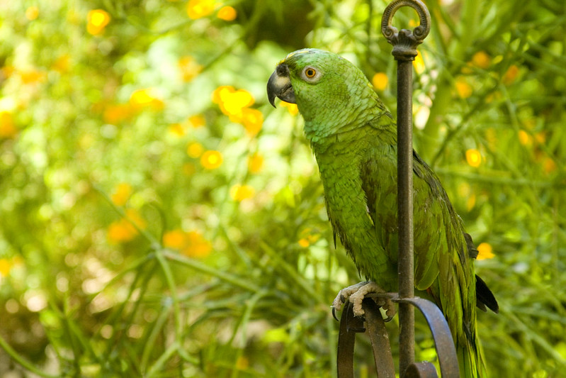 Organic Mechanic Parrot h