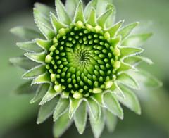 DSC_2494macroflowerlovers
