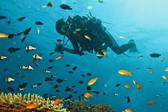 Scuba Diving Raya Island - Image by Adriano Trapani