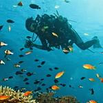 Tauchen auf einer Phi Phi Island Tour