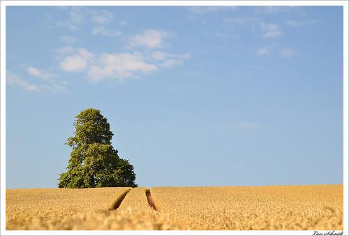sky tree nature field landscape 50mm natur feld himmel landschaft baum afnikkor50mmf18d