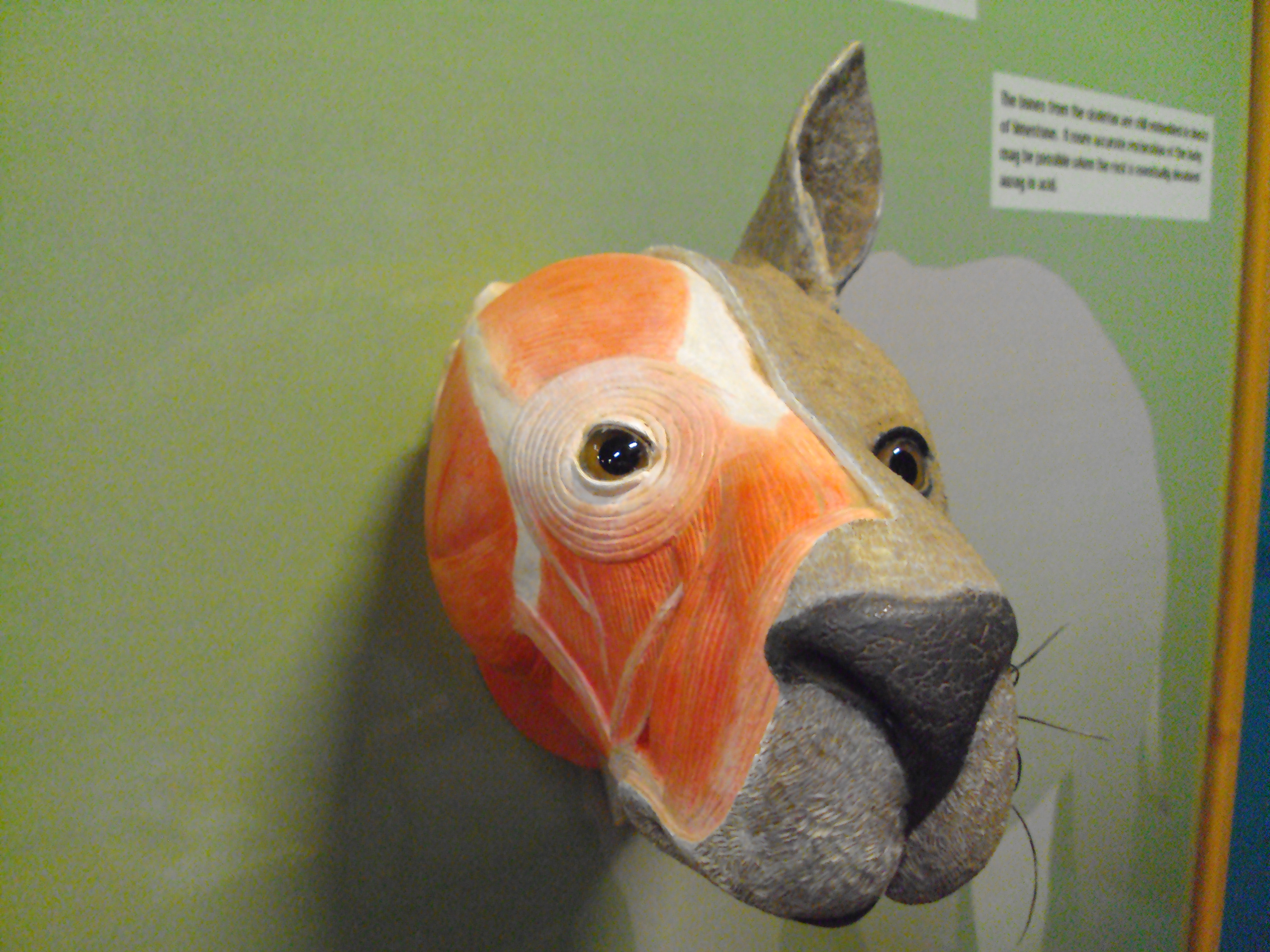 The Great Fish River museum