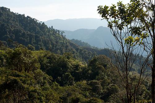 <i>Gastrotheca plumbea</i> Rana marsupial plomiza. Habitat
