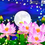 Hd Wallpapers Abstract Summer Wallpaper Flight Fantasy Flowers Lily Pads Moon Nature 1280x1024 Wallpaper Jpg