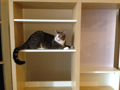 Amelia explores a desk hutch