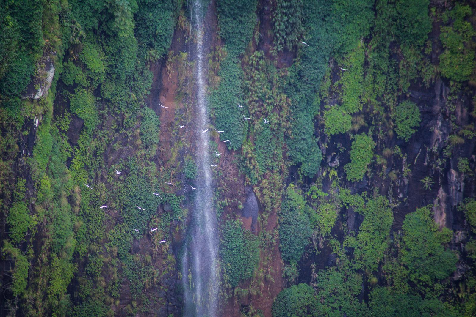 Birds fly by the Thoseghar Waterfalls, Maharashtra