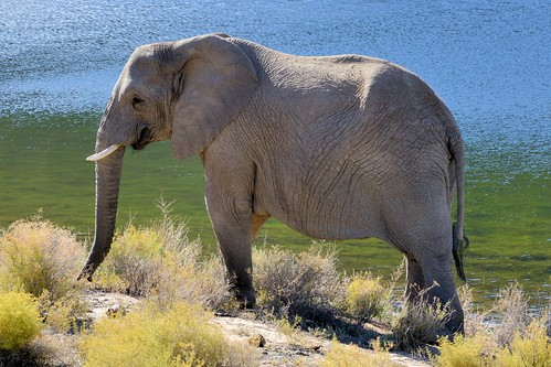 Elephants in Sanbona-10-1
