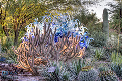 Chihuly Returns to the Botanical Garden