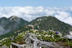 Image taken with a Nikon Df