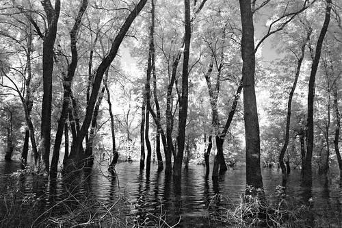 trees lake water greece infrared arta ziros filippiada υπέρυθρο λίμνη άρτα νερό δέντρα φιλιππιάδα λίμνηζηρού