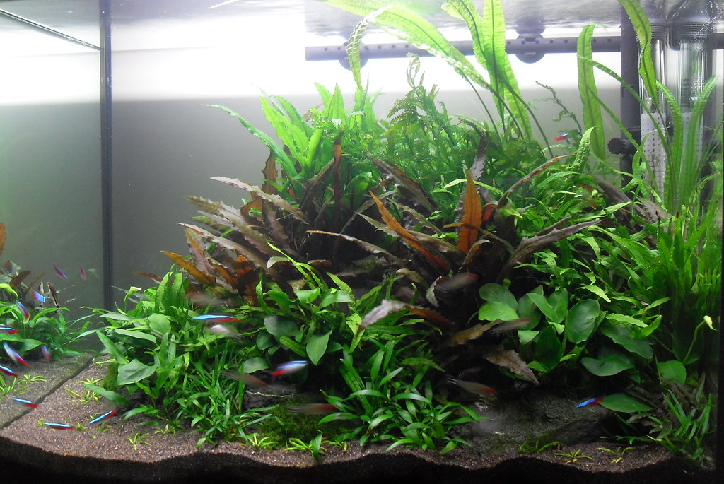 Best Substrate For Planted Freshwater Aquarium