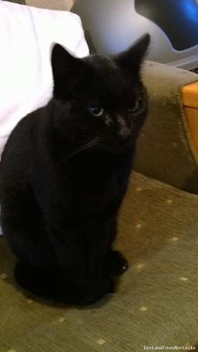 Fri, Dec 20th, 2013 Lost Male Cat - Hacketstown Road, Carlow