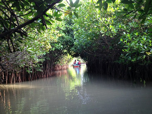 Canal - Mangrove Forest, Pichavaram - Raamesh Keerthi N J