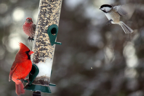 birds 044