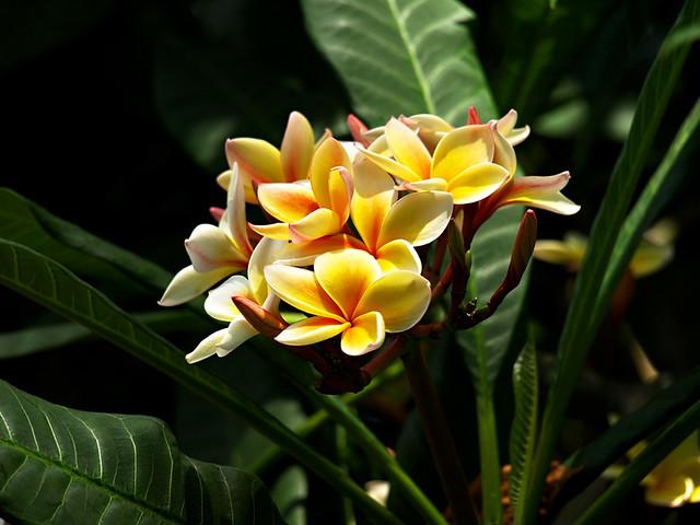 Flowers, Botanical Gardens, Puerto de la Cruz, Tenerife