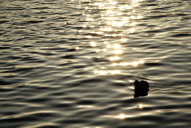 箱根-蘆之湖
