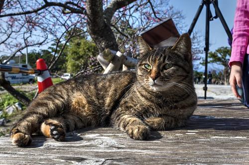 今帰仁グスクの猫