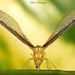 Wing Spread........ by aroon_kalandy