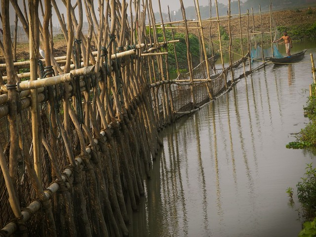 Towards the end of October, the locals construct 'khar bheta' or 'khar bandh'- a temporary structure of series of bamboo screens, across the Khanajan (the channel that carries water from the Brahmaputra to the wetland). This is made to prevent the fish from going out of Deepor beel. During the monsoons when water enters the beel, this 'khar bandh' is opened for the fish from the Brahmaputra to come in. This picture shows the final set of screens at the Khanajan channel.