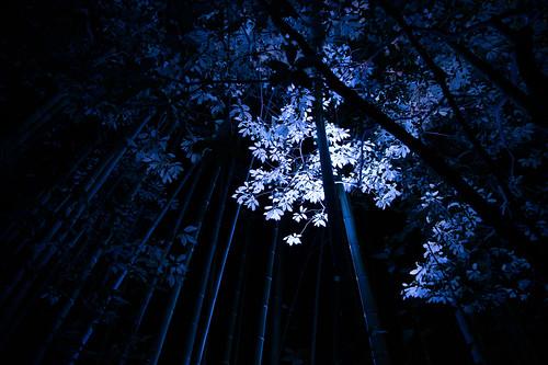 Kyoto Arashiyama Hanatouro Festival